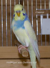 Papa Casimir