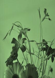 Espace vert - Fleurs