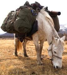 Cheval de bât lac Khovsgol Mongolie