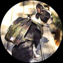 education canine educateur dresseur methode