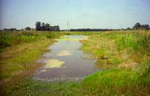 Blänken fallen zeitweilig trocken – ein Lebensraum für Anpassungskünstler. Foto: Biostation