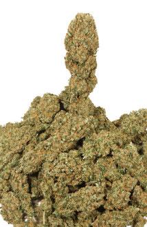 Trockenen Hanf (Cannabis) Blüten / Marihuana