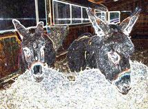 16 Leuchtende Esel/Luminous donkey