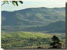 Territorio di Cirò