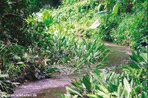 Natürliches Habitat in Sri Lanka