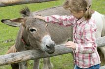 Sortie en famille : découvrir les ânes avec des enfants en Limousin