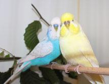 Merlin und Sunny