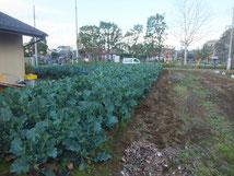 市街化区域内農地