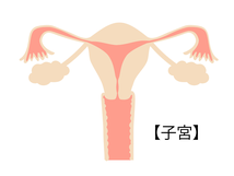 仙骨(骨盤)と子宮・卵巣との関係