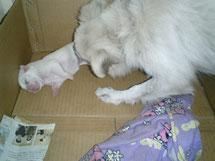 母親犬(お嬢)とクリーム