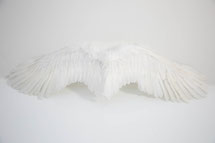 秋葉原 コスプレスタジオキチサ 純白の翼