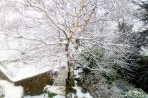 La neige est tombée cette nuit et a tout recouvert