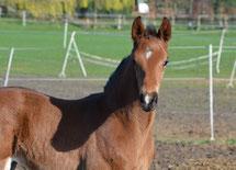 Lishani 4 Wochen alt