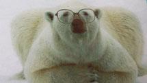 Eisbären Familiengruppe in Eris Arche
