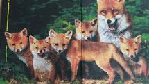 Eris Arche Elementargruppe Füchse 3-6 Jahre