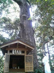 杉の古木があります