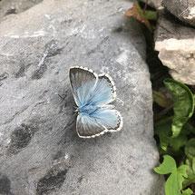 Schmetterling, Bläuling, Natur, Auszeit auf der Alp, Ronald Kalbermatten, Der Coach