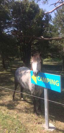 camping du chevalet aspres sur buech