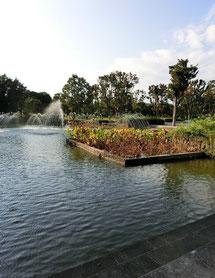 ●初夏にハスがきれいに咲く池