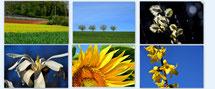 Fotos kaufen Lizenzen Fotografie