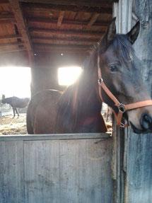 9.1.2014,meine Begegnung mit vielen Pferden