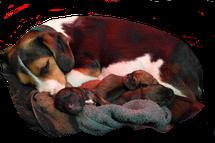 Hundeschule Bremen - Ihre Hundeschule MOMO - Beratung vor dem Hundekauf