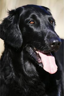 Laska hat Esther bis Oktober 2015 begleitet
