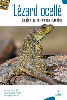 Le Lézard ocellé - Un géant sur le continent européen