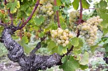 visite de vignoble oenotourisme