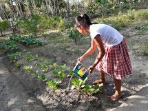 学校には小さな菜園を設置し、野菜づくりにも取り組んでいる