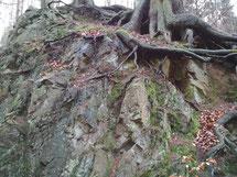 Die Wurzeln verbinden uns mit der Erde - Märchen verbinden uns mit den Ahnen
