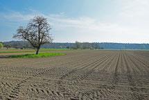 Landwirtschaft auf 4 Kontinenten- als Landwirtin um die Welt