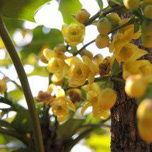 何の花 黄色