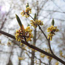 黄色い花 種類