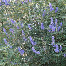 青紫色の花 種類