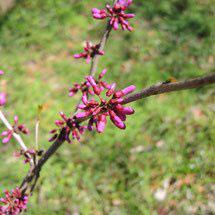 紫の花が咲く木 何