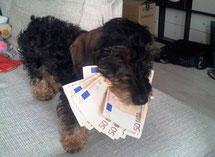 hond met geld in bek