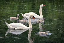 Tierfamilien, Tierfamilien lernen, Tierfamilie Arbeitsblatt, Tierfamilie Überblick, Tierfamilie Bauernhof, Tierfamilie Waldtiere
