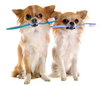 чистка зубов собака кошка саратов