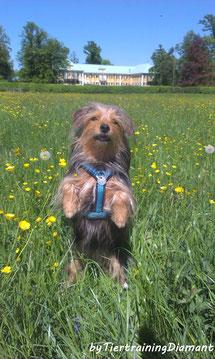 HundetrainingMai2019Salzburg;gruppentraininghund,hundetrainingösterreichMai2019,junghundekurs,welpentraining, clickertraining, urlaubstraining,ernährunghund, social walk salzburg,hundeschule salzburg, kurs hunde in salzburg und österreich