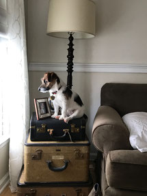 puppy dainty dandelion end table jack russell