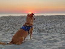 Geschirr für Hunde, Filos, Geschirr, Hunde-Geschirr, Geschirr für Hund, Geschirre, Geschirr mit Anker, maritimes Hundegeschirr
