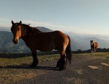 Le Mont Suhalmendi depuis Sare