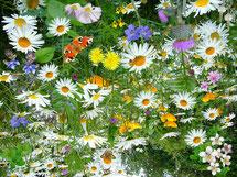philosophie du traitement des plantes par le Reiki