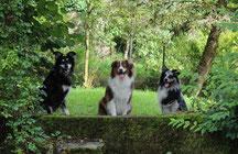 Hundebetreuung Schaffhausen
