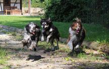 Hundebetreuung Stundenweise