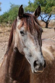 Rescue Horse called Manuela