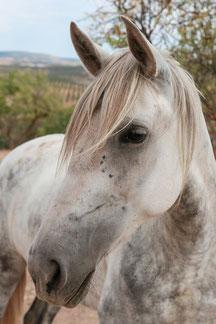 Rescue Horse called Leonera