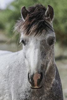 Rescue pony called Valiente
