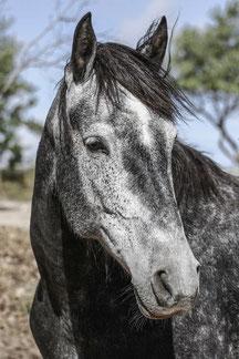 Rescue horse called Triana